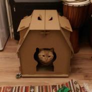 Jones in the Cat-House again