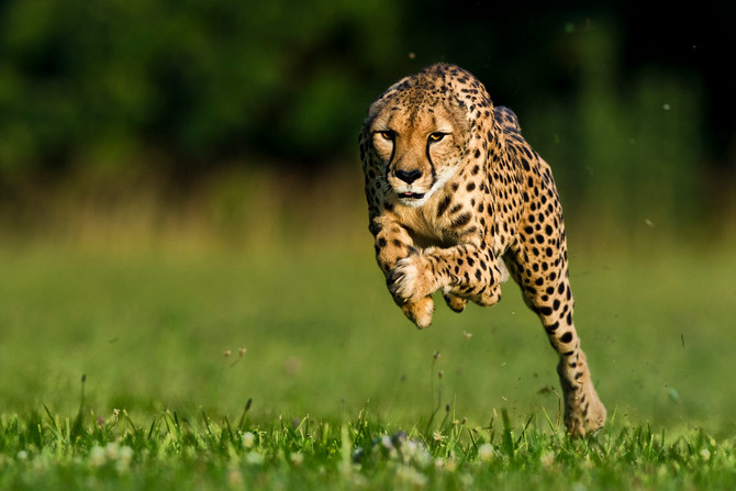 The Cheetah at the Zoo: Preventing Decontented BMWs