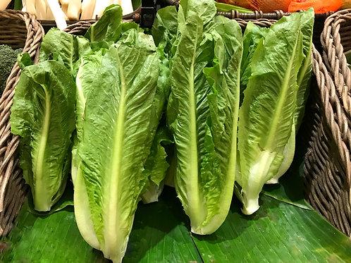Parris Island Cos Romaine Lettuce
