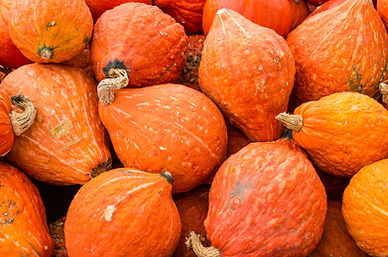 Orange hubbard winter squash at the farm