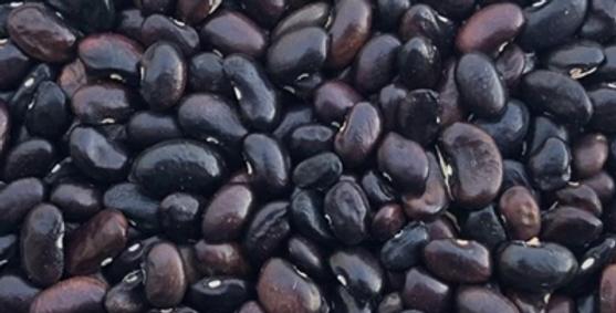 Bean, Lenape Blue Bread Bean / Purple Kingsessing