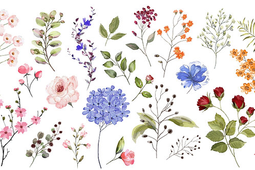 Wildflowers -Annual Mix