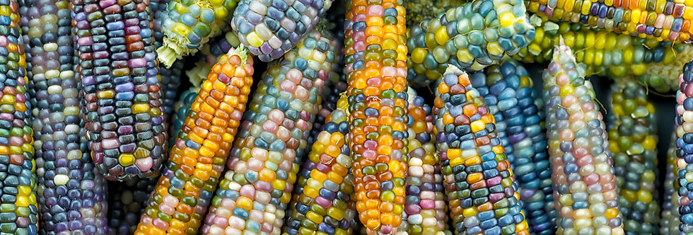 Cherokee Glass Gem Corn