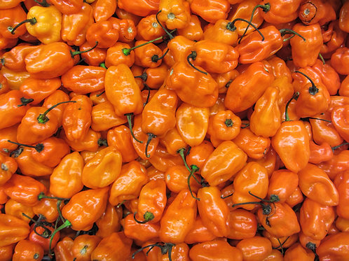 Orange Habanero Pepper