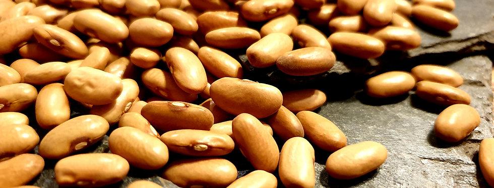 Arikara Yellow Bean