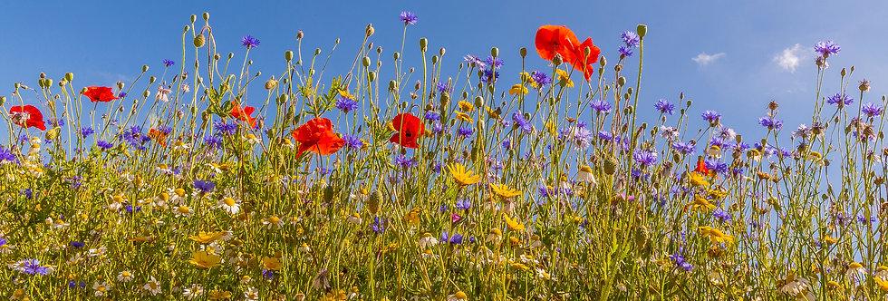 Wildflowers - Sun Mix