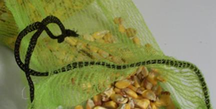 Corn, Warners Gourdseed