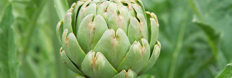 Artichoke, Green Globe