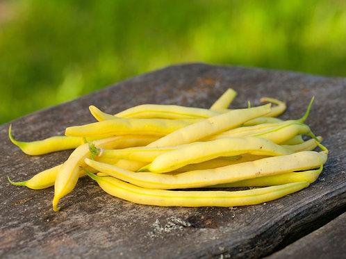 Golden Wax Bush Bean