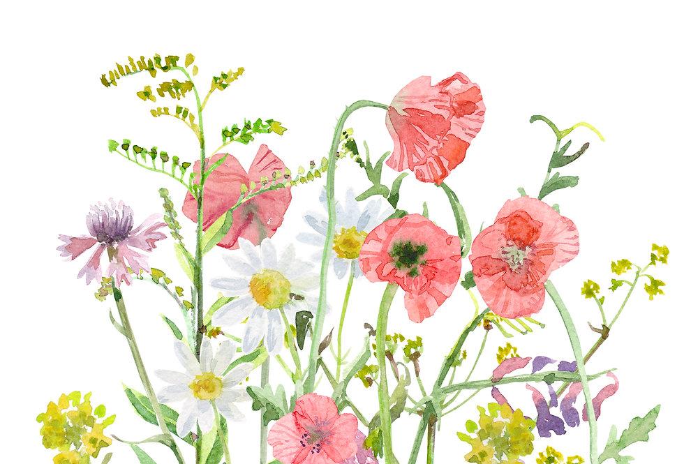 Wildflowers - Low Maintenance Mix
