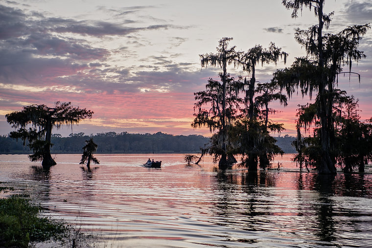 Mossy Cypress Trees Against Pink Sky at