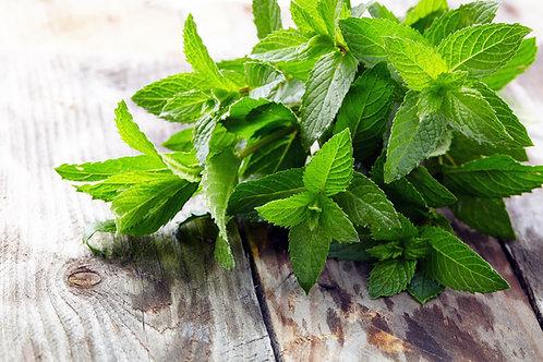Herb, Mint