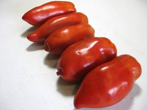 Tomato, Opalka