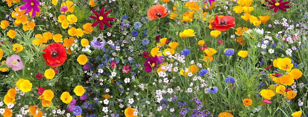 Wildflowers - Bee Feed Mix