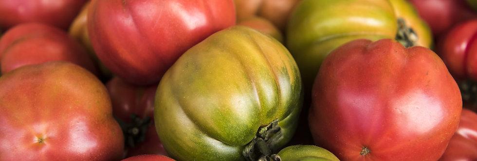 Tomato, Italian Heirloom