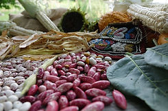 Alliance of Native Seedkeepers heirloom and rare seeds of corn, beans, squash, sunflower and Tuscarora Native American beaded bag