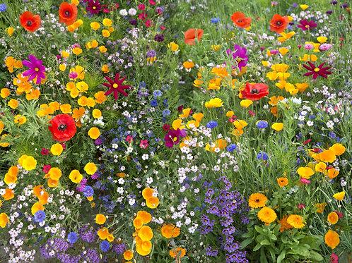 Wildflowers Perennial Mix