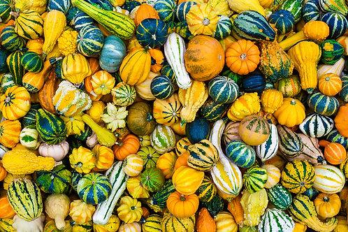 Gourds - (Ornamental Mixed)