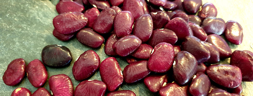 Worchester Indian Red Pole Lima Bean