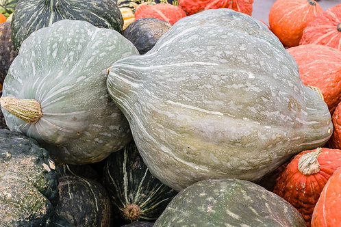 Squash, Winter- Blue Hubbard