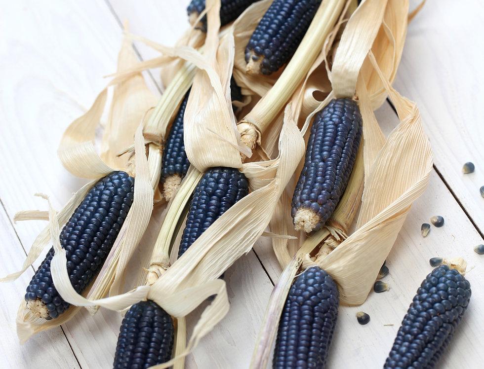 Corn, Hopi Blue