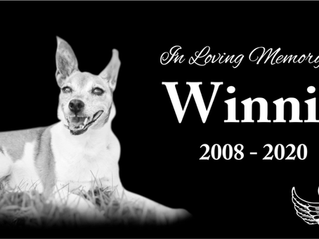 The Tribute to Winnie #lovewhatmatters