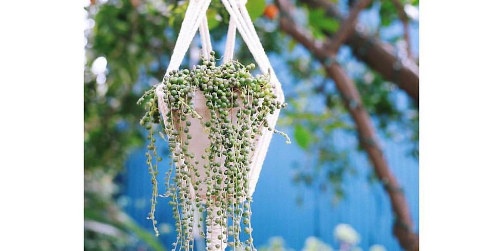 Knot + Pot | Macrame Plant Hanging Workshop