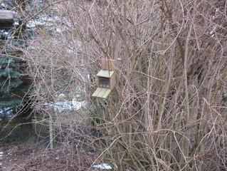 im Winter füttern wir nicht nur die Vögel