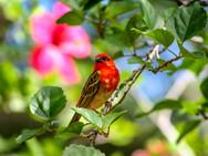 Vogelpracht