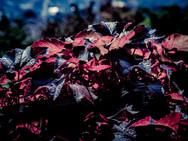 Herbst am Balkon