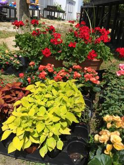 Plants & Flowers 1