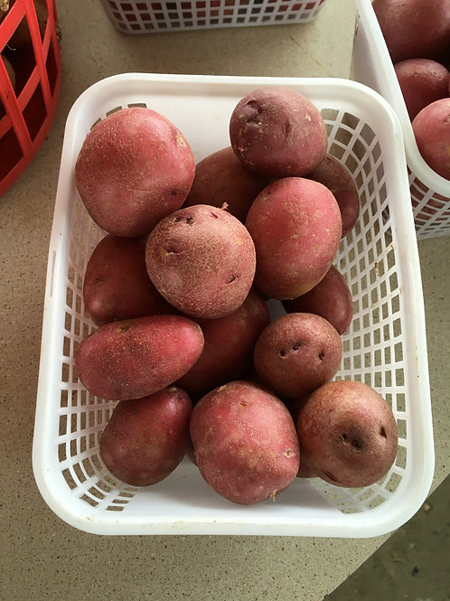 Small Red Potatoes (bskt)
