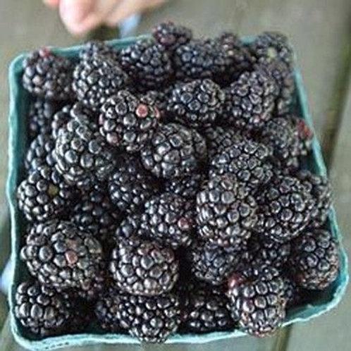 Blackberries (pint)