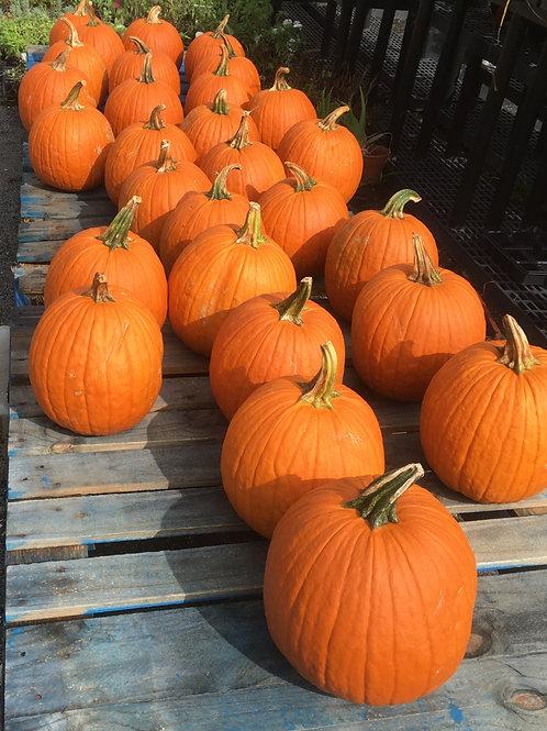 Pumpkins (ea)