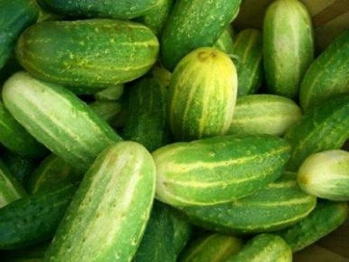 Pickling Cucumbers (bskt)