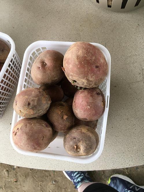 Large Red Potatoes (bskt)