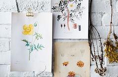 Illustrazioni di fiori