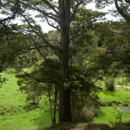 Der Baum - ohne alles.