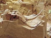 Angostura Reunion Lodge mammoth site