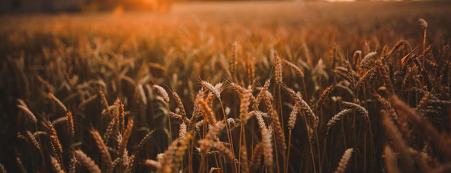 harvestmain102.jpg