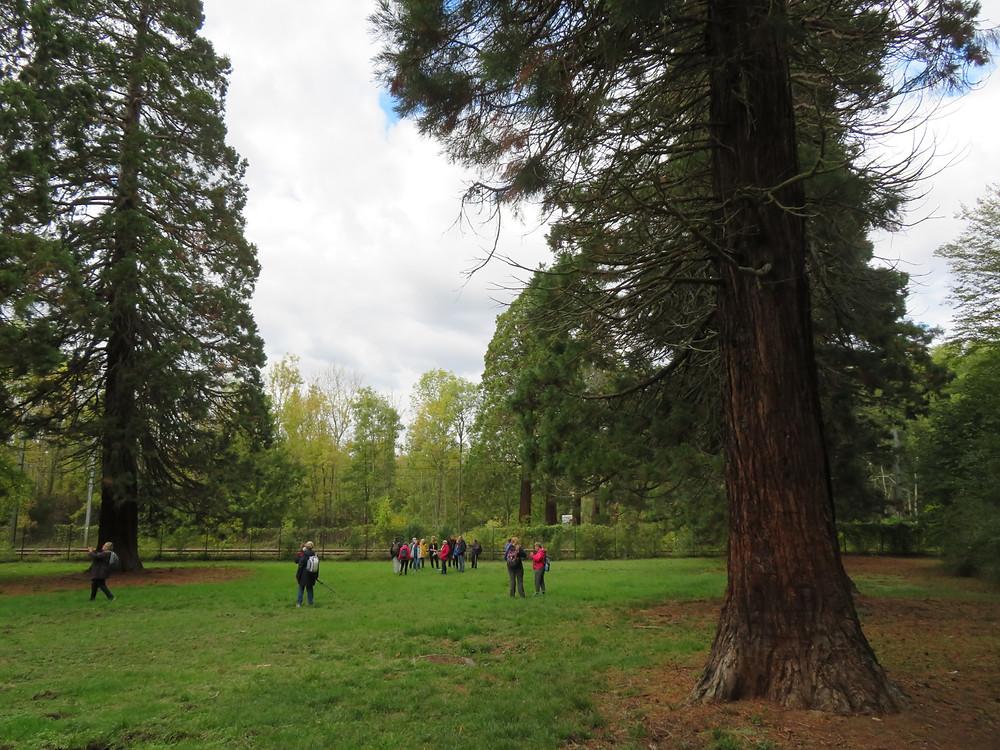 Nombreux séquoias avec au centre notre groupe de randonneur
