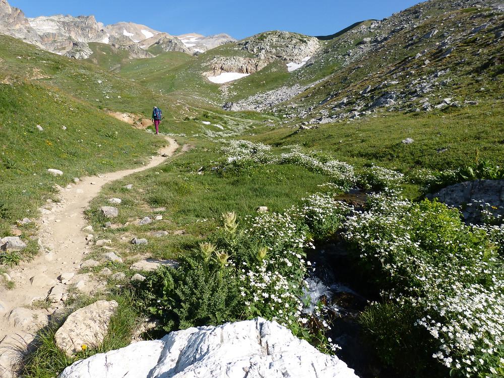 Vue de la vallée aux magnifiques couleurs de l'été pleine d'herbe