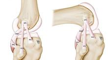 Nova Descoberta - Um novo ligamento no joelho