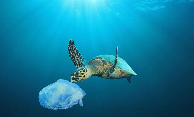 플라스틱 오염 된 대양