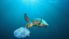 """Descarte inadequado de """"lixo"""" durante o Réveillon não pode ser ignorado"""