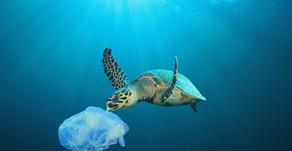 La pollution plastique...