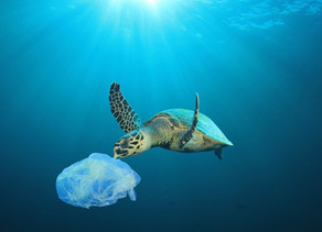 How To Handle Plastic Pollution