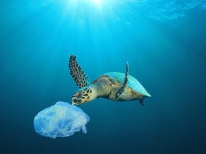 Why single use plastic bags are a big deal