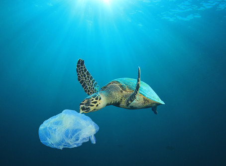 What's up with plastics? Can plastics really be damaging my health as well as the environment?