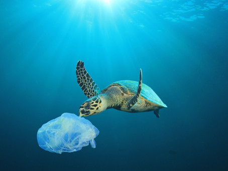 How bad is Plastic for the Environment?